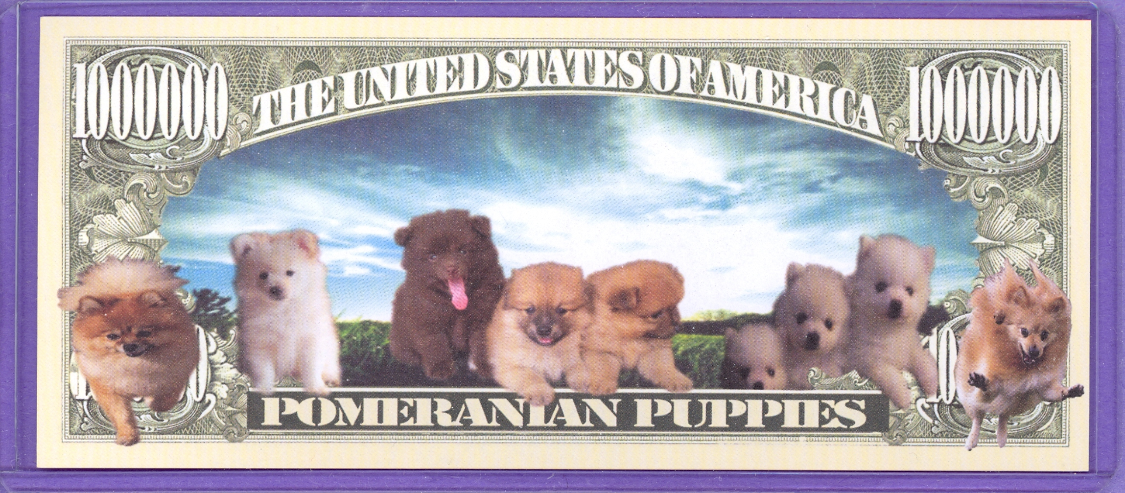 Pomeranian Puppies $1,000,000 Novely Note